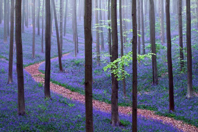 الغابات فى بلجيكا