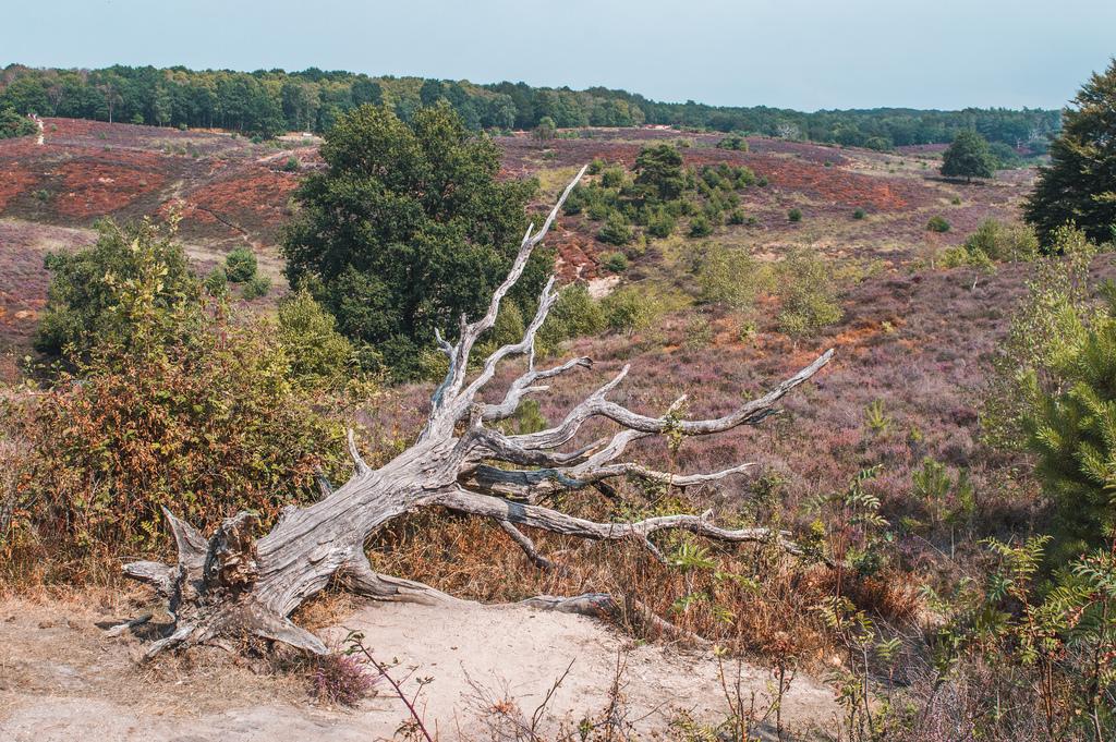 الغابات فى هولندا